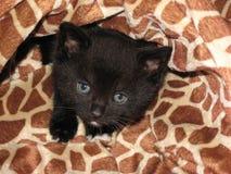 Γάτα εμπαιγμών Στοκ εικόνες με δικαίωμα ελεύθερης χρήσης