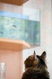 γάτα ενυδρείων Στοκ Εικόνα
