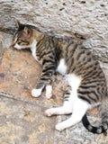 Γάτα εξαρτήσεων Στοκ φωτογραφία με δικαίωμα ελεύθερης χρήσης