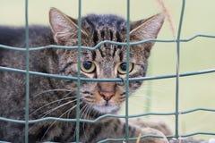 Γάτα εξετάζοντας σας Στοκ Εικόνες