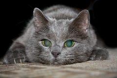 γάτα επίθεσης Στοκ εικόνες με δικαίωμα ελεύθερης χρήσης
