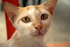 γάτα επαιτών περιπλανώμενη Στοκ Φωτογραφία