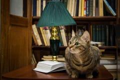 Γάτα επιστημόνων Στοκ φωτογραφία με δικαίωμα ελεύθερης χρήσης