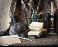 Γάτα επιστημόνων Στοκ φωτογραφίες με δικαίωμα ελεύθερης χρήσης