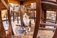 Γάτα εστιατορίων Στοκ εικόνες με δικαίωμα ελεύθερης χρήσης
