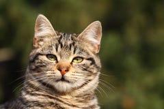 γάτα εσωτερική Στοκ Φωτογραφία