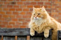 γάτα εσωτερική στοκ εικόνα με δικαίωμα ελεύθερης χρήσης