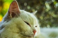 Γάτα ευτυχής Στοκ φωτογραφία με δικαίωμα ελεύθερης χρήσης