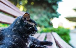 Γάτα ευτυχής Στοκ εικόνα με δικαίωμα ελεύθερης χρήσης