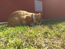 γάτα ευτυχής στοκ φωτογραφίες με δικαίωμα ελεύθερης χρήσης
