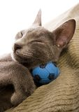 γάτα ευτυχής στοκ εικόνες