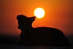 γάτα Ελλάδα Στοκ Εικόνα