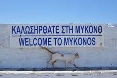 γάτα Ελλάδα Στοκ Φωτογραφίες
