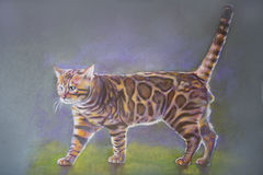 Γάτα ζωγραφικής Βεγγάλη Στοκ Φωτογραφία