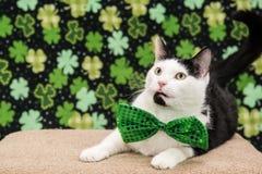 Γάτα ημέρας του ST Patricks στοκ φωτογραφίες με δικαίωμα ελεύθερης χρήσης