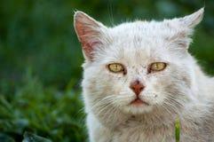 Γάτα θλίψης Στοκ Φωτογραφίες