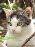 γάτα ΙΙ Στοκ φωτογραφίες με δικαίωμα ελεύθερης χρήσης