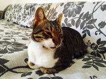 γάτα ικανοποιημένη Στοκ εικόνες με δικαίωμα ελεύθερης χρήσης