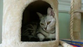 Γάτα κάτω από την τρύπα Στοκ εικόνα με δικαίωμα ελεύθερης χρήσης