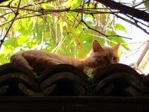 Γάτα κάτω από τους κλάδους στοκ φωτογραφίες