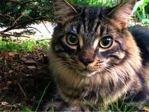 Γάτα κάτω από το δέντρο Στοκ εικόνες με δικαίωμα ελεύθερης χρήσης