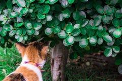Γάτα κάτω από το δέντρο στοκ φωτογραφία με δικαίωμα ελεύθερης χρήσης