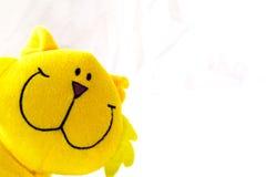 γάτα κίτρινη Στοκ Φωτογραφίες