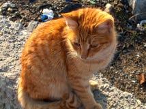 γάτα κίτρινη Στοκ εικόνα με δικαίωμα ελεύθερης χρήσης