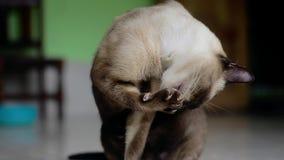 Γάτα καθαρισμού φιλμ μικρού μήκους