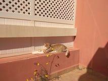 Γάτα και ήλιος στοκ εικόνες με δικαίωμα ελεύθερης χρήσης