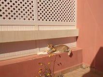 Γάτα και ήλιος Στοκ Εικόνες