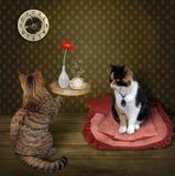 Γάτα και δίσκος με τον καφέ στοκ φωτογραφία με δικαίωμα ελεύθερης χρήσης