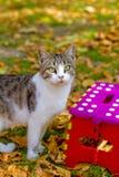 Γάτα και ζωηρόχρωμο σκαμνί στο πάρκο φθινοπώρου Στοκ εικόνα με δικαίωμα ελεύθερης χρήσης