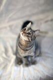Γάτα και η άγρια φύση φακών καμερών επαγγελματικής και Στοκ φωτογραφίες με δικαίωμα ελεύθερης χρήσης