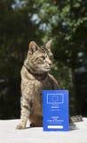 Γάτα και διαβατήριο της Pet Στοκ εικόνα με δικαίωμα ελεύθερης χρήσης
