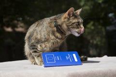 Γάτα και διαβατήριο της Pet Στοκ Φωτογραφίες