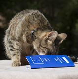 Γάτα και διαβατήριο της Pet Στοκ Φωτογραφία
