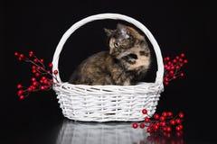 Γάτα και καλάθι Στοκ Εικόνα