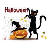 Γάτα και κολοκύθα Στοκ Εικόνα