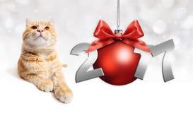 Γάτα και κόκκινη σφαίρα Χριστουγέννων με το κόκκινο τόξο κορδελλών σατέν Στοκ Εικόνα