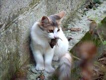 Γάτα και ποντίκι Στοκ φωτογραφίες με δικαίωμα ελεύθερης χρήσης