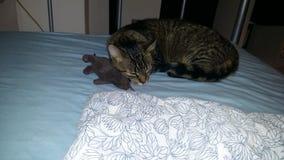 Γάτα και ποντίκι στοκ φωτογραφίες