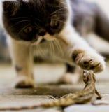Γάτα και σαύρα στοκ φωτογραφία