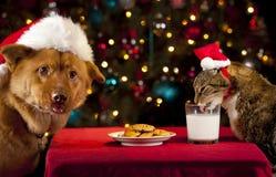 Γάτα και σκυλί που αναλαμβάνουν τα μπισκότα και το γάλα Santa Στοκ φωτογραφία με δικαίωμα ελεύθερης χρήσης