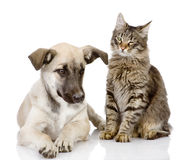 Γάτα και σκυλί από κοινού. Στοκ Εικόνα