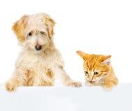 Γάτα και σκυλί επάνω από το άσπρο έμβλημα. να κοιτάξει κάτω. Στοκ εικόνα με δικαίωμα ελεύθερης χρήσης