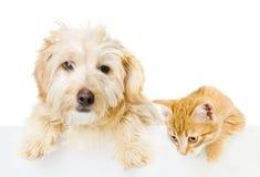 Γάτα και σκυλί επάνω από το άσπρο έμβλημα. Στοκ φωτογραφία με δικαίωμα ελεύθερης χρήσης