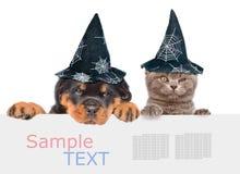 Γάτα και σκυλί με τα καπέλα για αποκριές που κρυφοκοιτάζουν από πίσω από τον κενό πίνακα η ανασκόπηση απομόνωσε το λευκό Στοκ φωτογραφία με δικαίωμα ελεύθερης χρήσης