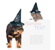Γάτα και σκυλί με τα καπέλα για αποκριές που κρυφοκοιτάζουν από πίσω από τον κενό πίνακα η ανασκόπηση απομόνωσε το λευκό Στοκ Φωτογραφία
