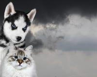 Γάτα και σκυλί μπροστά από έναν σκοτεινό ουρανό, λυπημένη ανήσυχη διάθεση στοκ εικόνα